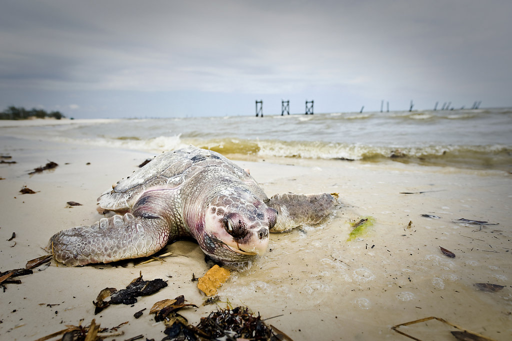 USA GULF OF MEXICO:  FROM  THE OIL SPILL TO THE CHEMICAL PLAGUE