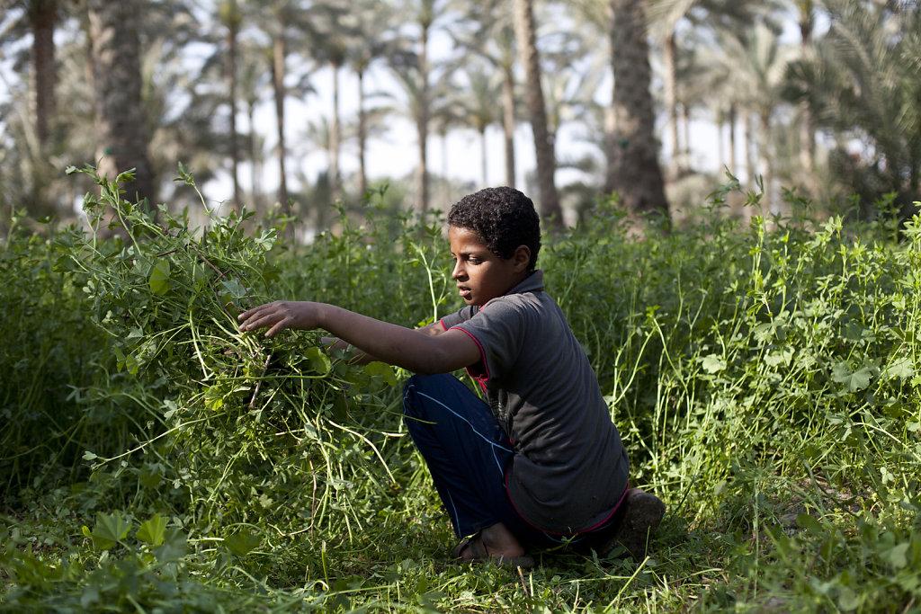 201304-Cairo-Egypt-026.jpg
